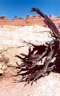 Delicate Arch Utah Hike